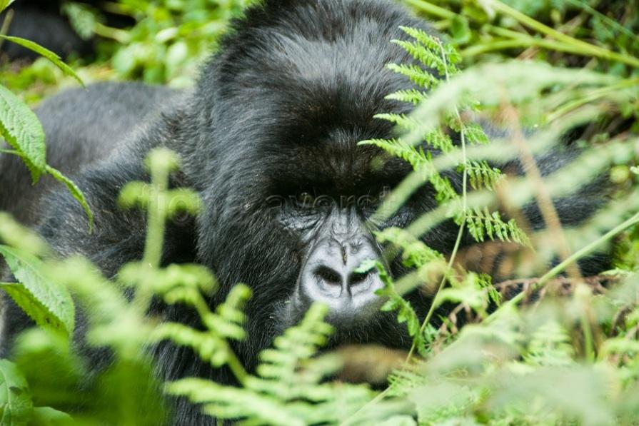 Rwanda SC 232