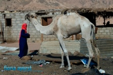 Fiona Ayerst Egypt-16