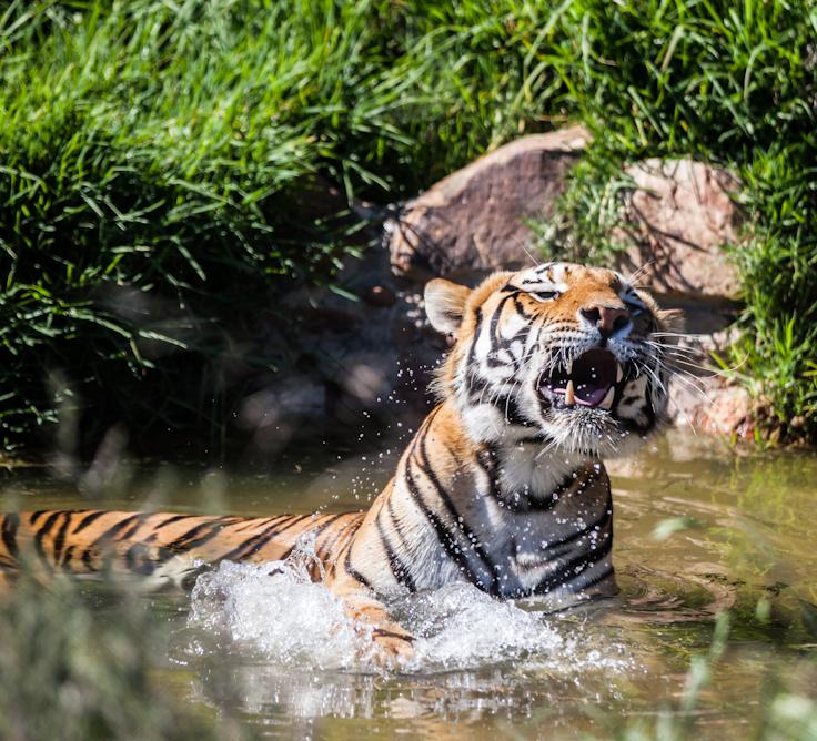 splashing on a hot day