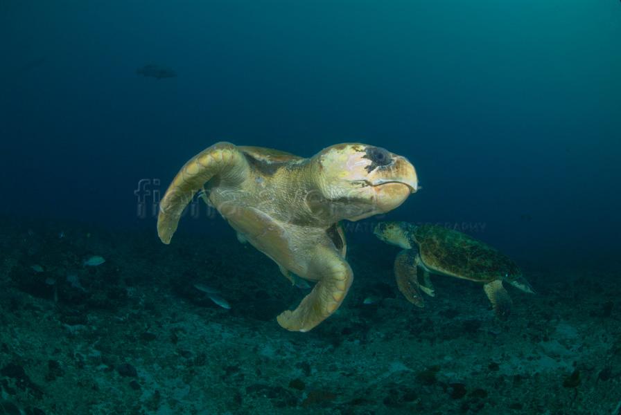 Sodwana Bay Turtles