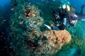 Diversity on Manta Reef. Credit: James Dobson