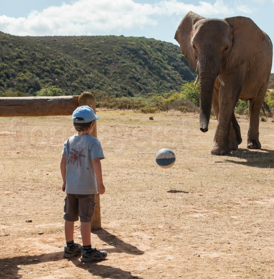 One of the Indalu elephants comes head to head with Finn Johnson in a game of soccer. Finn is guarding his goalposts fiercely.