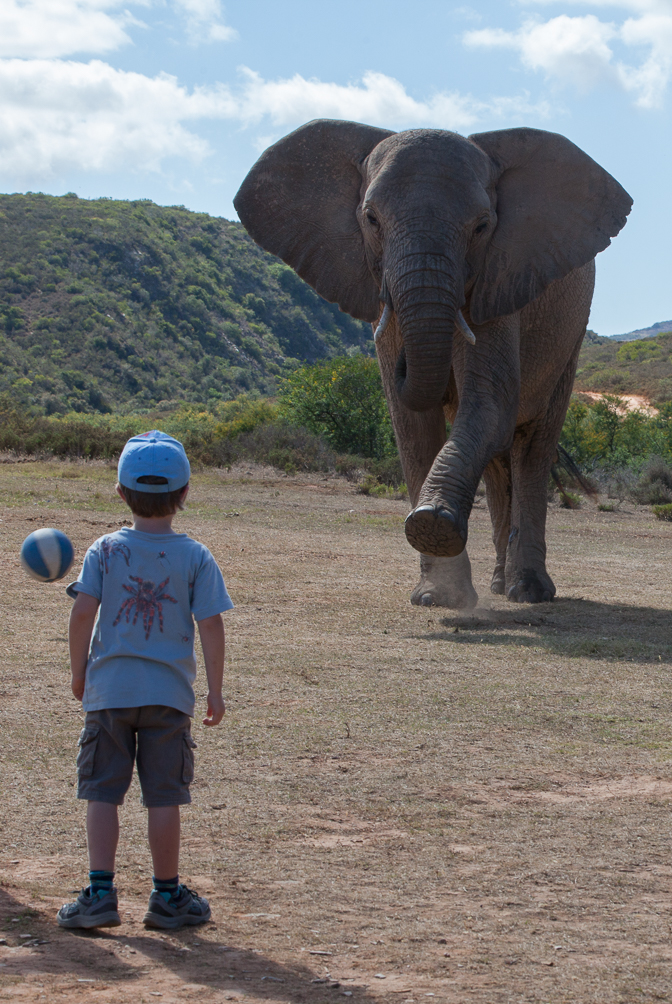 "The elephant tries to get a ball into Finn's goal- do you think it's a ""leftie""?"
