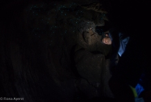 the roof of the cave is filled with tiny specks of light from the worms