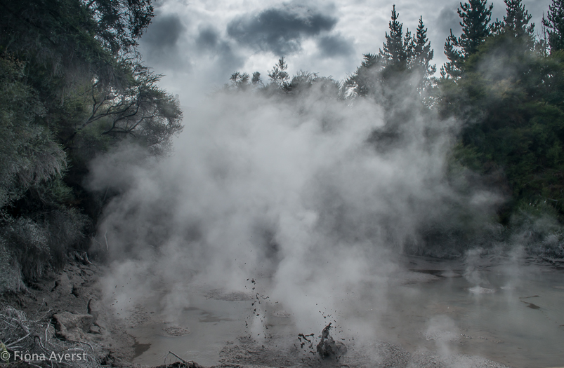 NZ is a thermal wonderland with popping mud and boiling steam all over